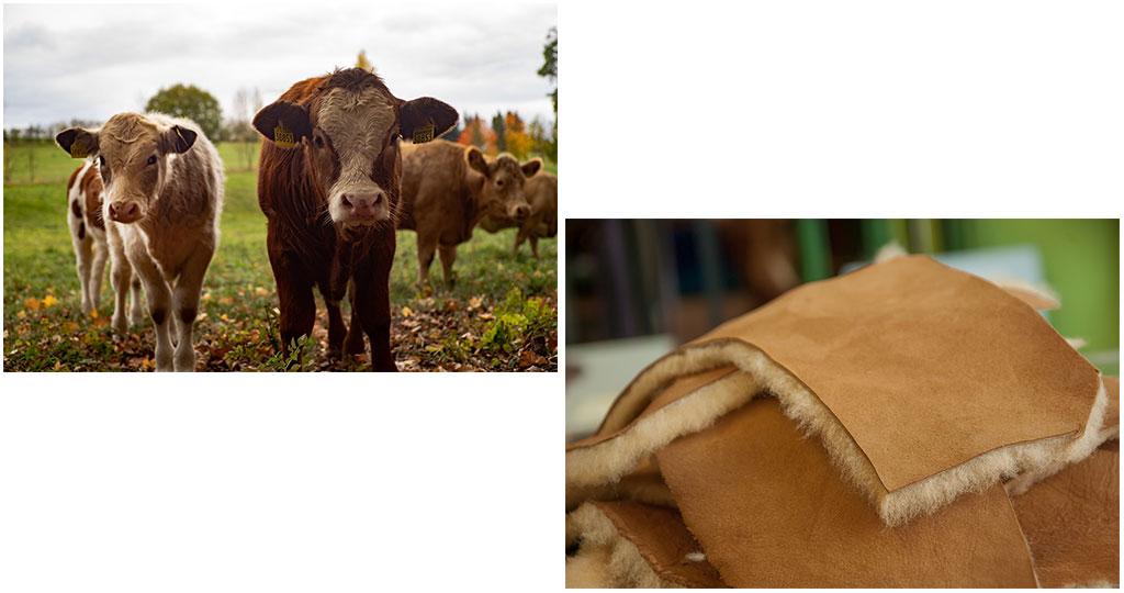 牛など皮の原料がわかる動物の図と、タンニン鞣を行なった後の革の図